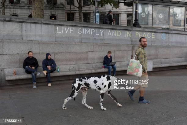 An environmental activist leads his pet Great Dane dog after drinking from a public fountain while protesting about Climate Change during an...