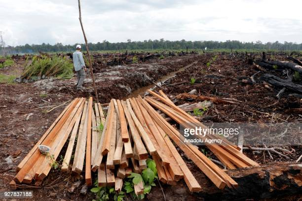 An environmental activist surveys damage at the Rawa Singkil Wildlife Reserve in Trumon South Aceh due to illegal landclearing activities in Aceh...