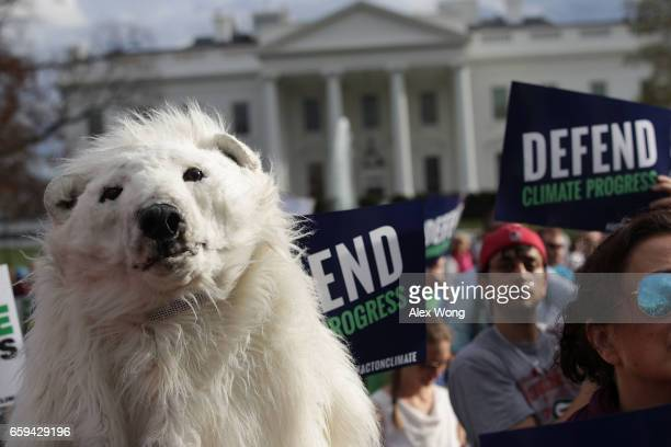 An environmental activist wears a polar bear costume during a protest outside the White House March 28 2017 in Washington DC Activists protest...