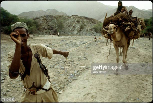 An Eritrean nomad leads his family's camel caravan along a driedup river bed in northern Eritrea 18th June 1978 His personal weapons consist of a...