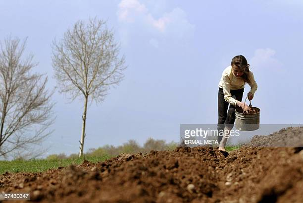An ethnic Albanian girl works at a field 26 April 2006, as the Prime Minister Agim Ceku visited the bordered village of Debelde on the verge of his...