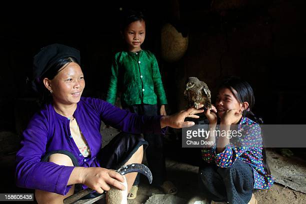 An ethnic minority H'mong woman peels cassava while her two daughters play with a baby owl that was caught close to their house in Chi Ca commune Xin...