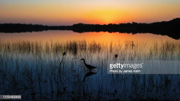 an everglades sunrise. - 低湿地 ストックフォトと画像