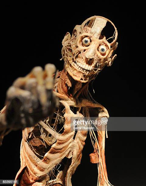 An exhibit is displayed at Gunther von Hagens' 'Body Worlds And The Mirror Of Time' exhibition at the O2 bubble on October 23, 2008 in London,...