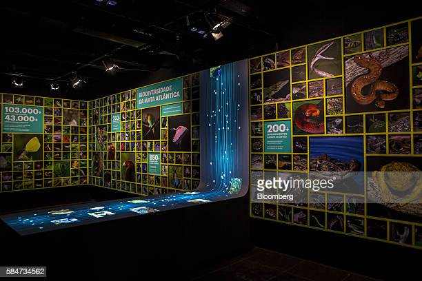An exhibition on Brazilian biodiversity sits on display at the Paineiras Vistor Center in the Tijuca National Park of Rio de Janeiro Brazil on...