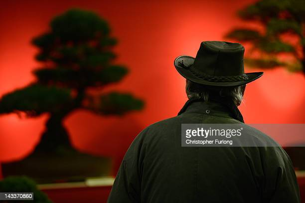 An exhibitor views bonsai trees as horticulturalists prepare their displays for the Harrogate Flower Show on April 25 2012 in Harrogate England Over...