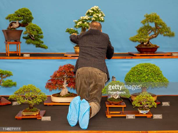 241 Bonsai Exhibition Photos And Premium High Res Pictures Getty Images