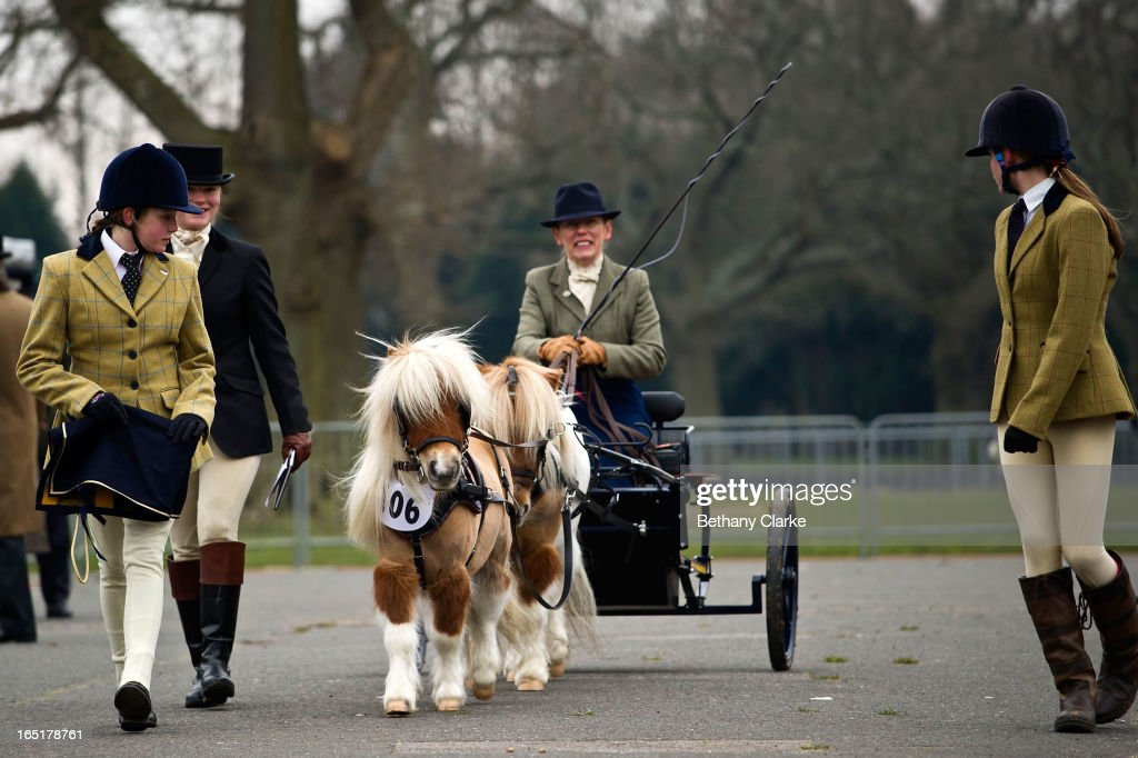 An exhibitor with miniture horses during the horse parade on April 1, 2013 in Ardingly, United Kingdom. The Parade is an amalgamation of two traditional parades, the London Cart Horse Parade, founded in 1885 and the London Van Horse Parade, founded in 1904. The objectives of these parades was to improve the general condition and treatment of London's working horses and to encourage drivers to take a humane interest in the welfare of their animals. There is a wide variety of breeds of animal ranging from donkeys to Dutch Friesians and Gelderlander's, to magnificent heavy horses.