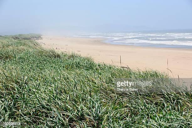 An expanse of beach, surf, and grass
