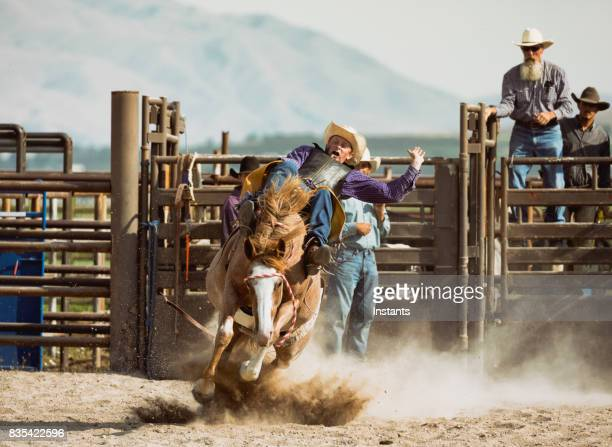 An experienced cowboy in action while bareback riding on a bucking horse.