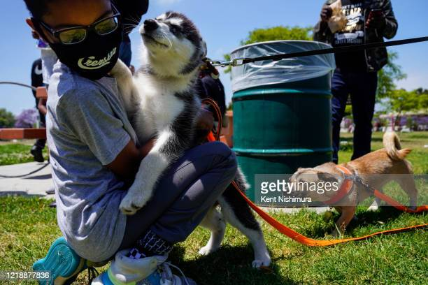 An extra friendly puppy shows affection to a young child at a Black Lives Matter event at Norman O Hudson Park on Saturday June 6 2020 in Los Angeles...