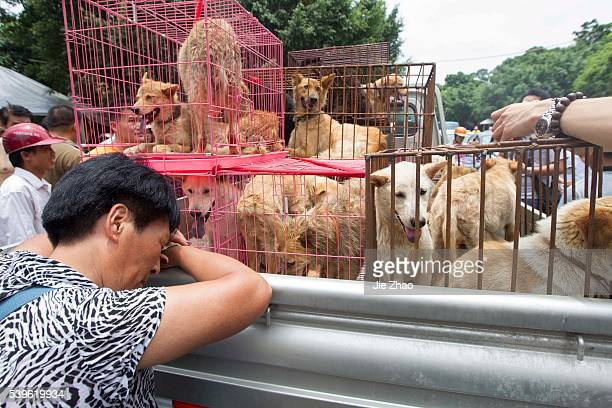 An femle activist protests and try their best to rescue dogs are caged at a free market ahead of the Yulin Dog Eating Festival in Yulin city, south...