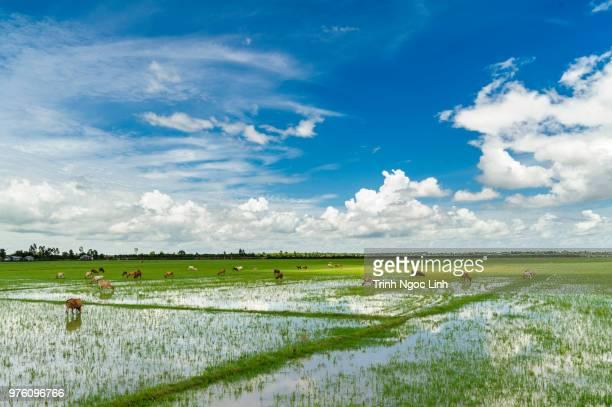 an giang - vietnam - ngoc trinh ストックフォトと画像