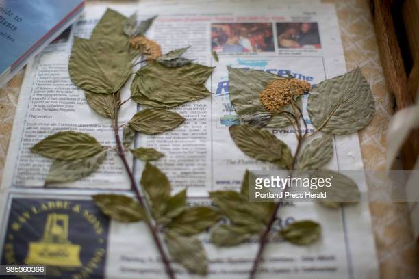 An herbarium sample in the process of being archived at Pixie Williams' home Williams and some volunteers have been putting together a teaching...
