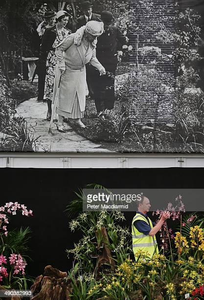 An historic photograph of Queen Mary looks down on preparations at the Royal Horticultural Society's Chelsea Flower Show on May 14, 2014 in London,...