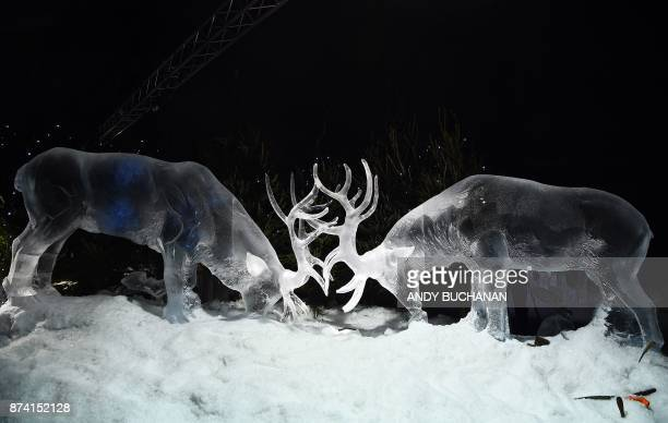 An ice sculpture of two stags carved by ice sculptor Darren Jackson is pictured which makes up part of a forthcoming exhibition 'The Ice Adventure A...