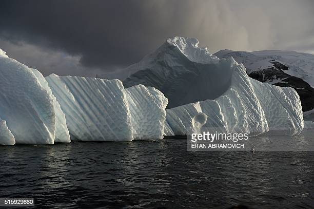 An iceberg is pictured in the western Antarctic peninsula on March 04 2016 Like seals and whales penguins eat krill an inchlong shrimplike crustacean...