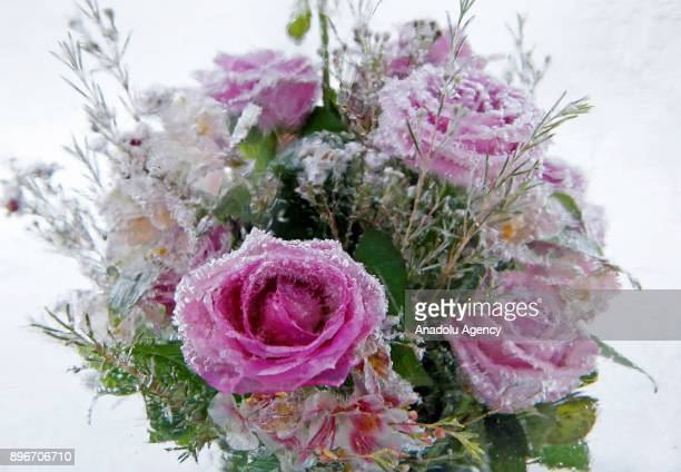 An icecovered flower bouquet is seen during the New Year's festival 'Ice Age' on the Pevcheskoye Field in Kiev Ukraine on December 21 2017 The...