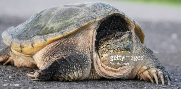 An Idaho junior high teacher fed an ailing puppy to a snapping turtle in a lesson for students that prompted an uproar and local backlash against the...