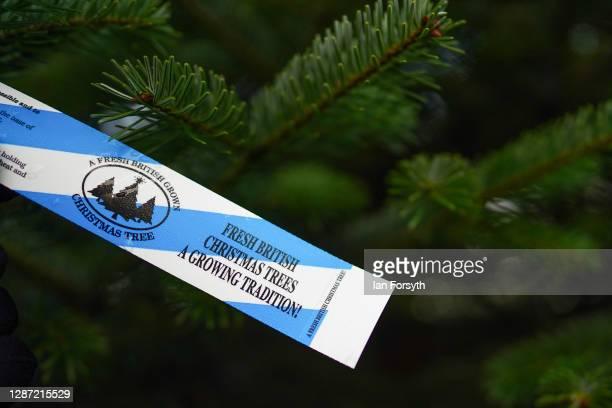 An identification tag hangs from a fir tree at York Christmas Trees who this year have been awarded the title of Christmas Tree Champion Grower of...
