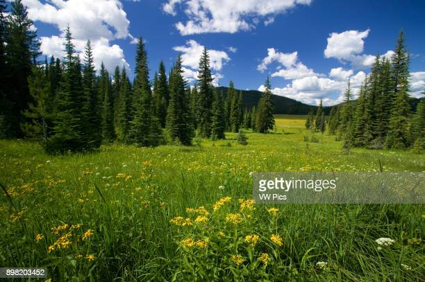 An idyllic summer day at Bunchgrass Meadow in the Selkirk Mountains of eastern Washington near the Idaho border