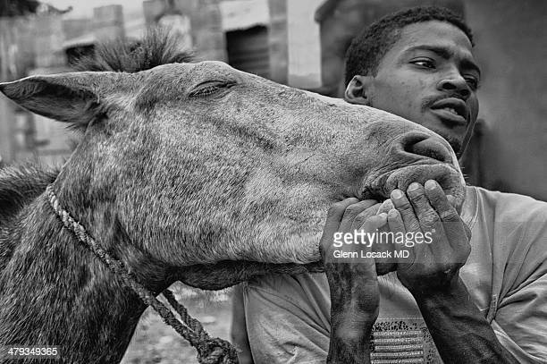 CONTENT] An ill horse and his owner holding his mouth to open it trying to feed it another diet black and white San Pedro de Macoris Dominican...