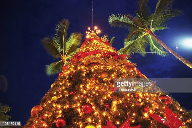 an illuminated christmas tree surrounded by a couple of palms, long exposure, low angle view, hawaii, usa - hawaii christmas stock pictures, royalty-free photos & images