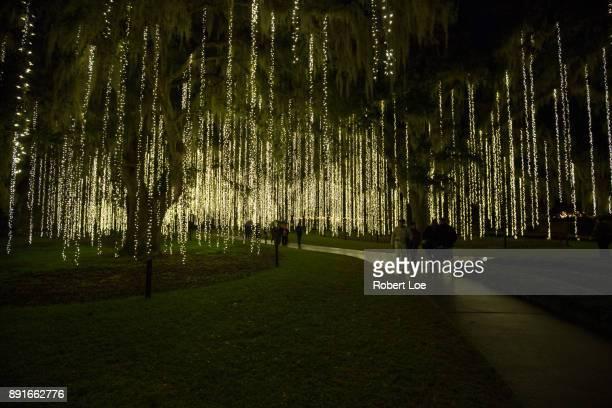 An Illuminated Path
