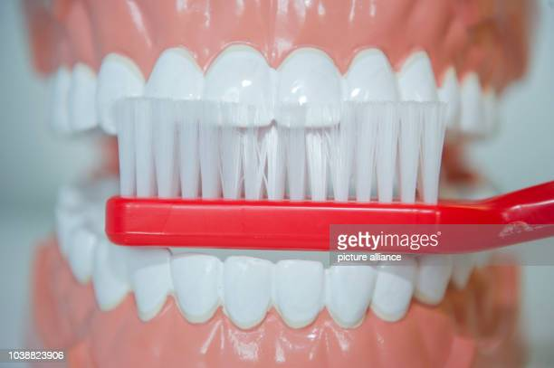 ILLUSTRATION An illustrated picture shows a model of a set of teeth and a toothbrush at the Centre for Dental and Oral Medicine at the university...
