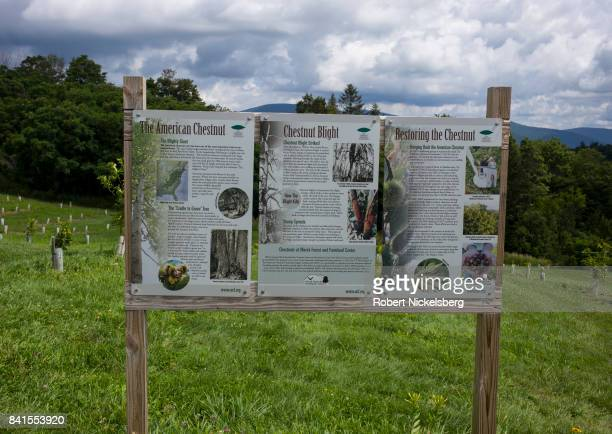 An illustrated sign describes a field of young American Chestnut tree growing in a field August 19 2017 at the Merck Forest and Farmland Center in...