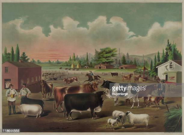 An illustration depicts a pen crowded with cattle sheep and pigs 1887