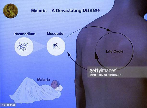 An illustration describing the research on malaria by Nobel Medicine Prize winners 2015 is displayed on a screen during a press conference of the...