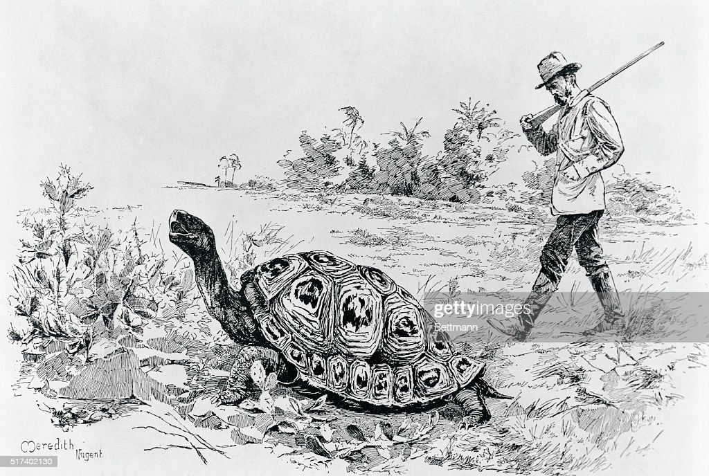 Darwin Testing the Speed of an Elephant Tortoise (Galapagos Islands) by Meredith Nugent : News Photo