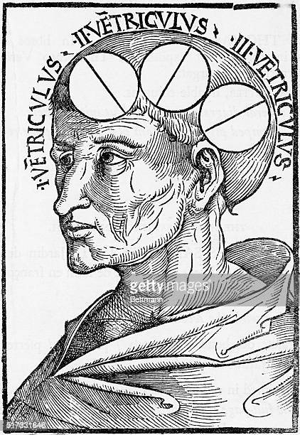 An illustration of Cell Doctrine from a 1506 edition of Philosophia Naturalis by Albertus Magnus This doctrine followed a three cell concept of...