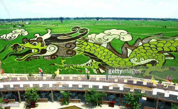 An image created by different kinds of rice in a paddy for spectating in a farmingtourism attraction in Shenyang in northeast China's Liaoning...