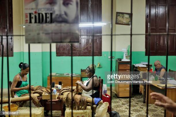 An image of Cubas late Revolution leader Fidel Castro hangs on a fence at the H Upmann tobacco factory during the annual Habanos tobacco festival on...