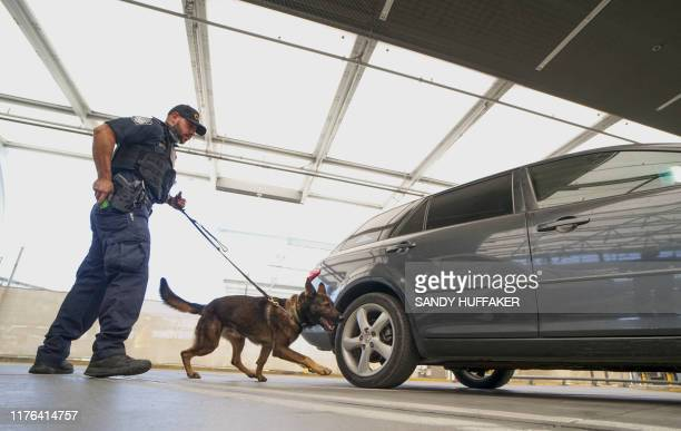 An Immigration and Customs Enforcement agent checks automobiles for contraband in the line to enter the United States at the San Ysidro Port of Entry...