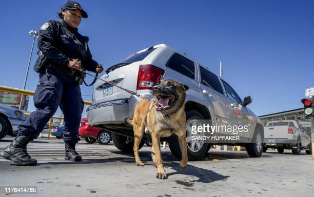 An Immigration and Customs Enforcement K-9 agent checks automobiles for contraband in the line to enter the United States at the San Ysidro Port of...