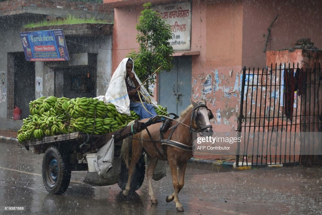 An India man transporting bananas in a horsedrawn cart makes his way along a street as heavy monsoon rain falls in Amritsar on July 20 2017 / AFP...