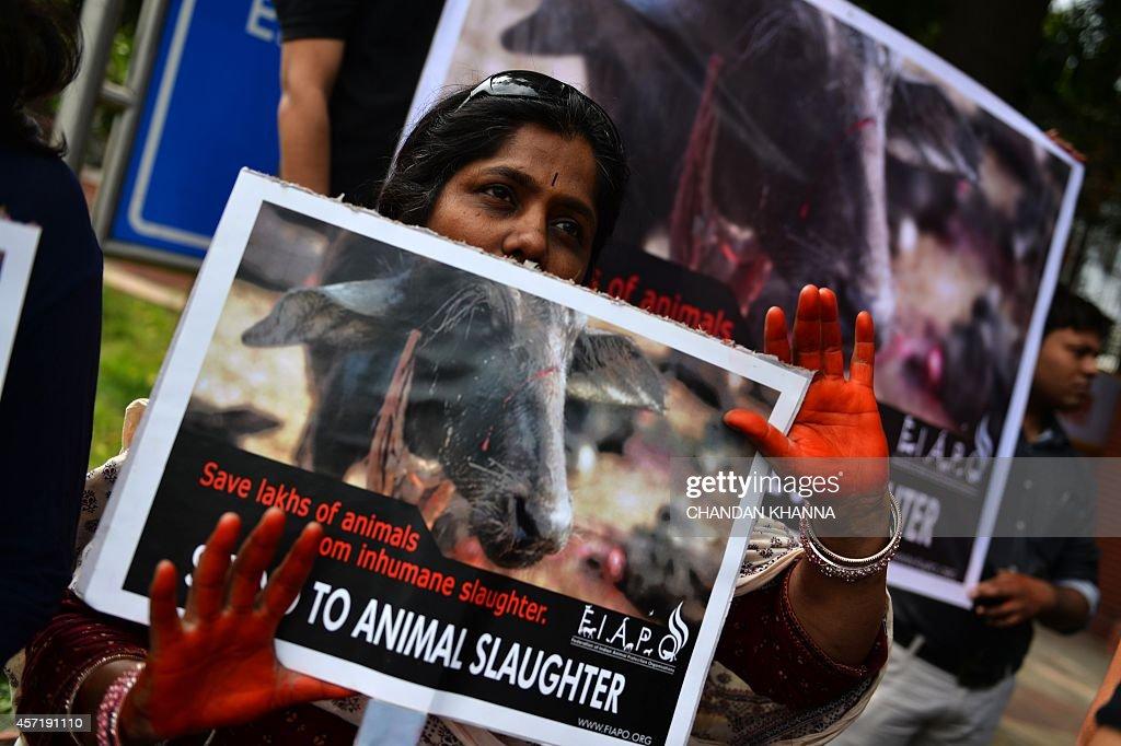 INDIA-NEPAL-ANIMAL-SACRIFICE-PROTEST : News Photo