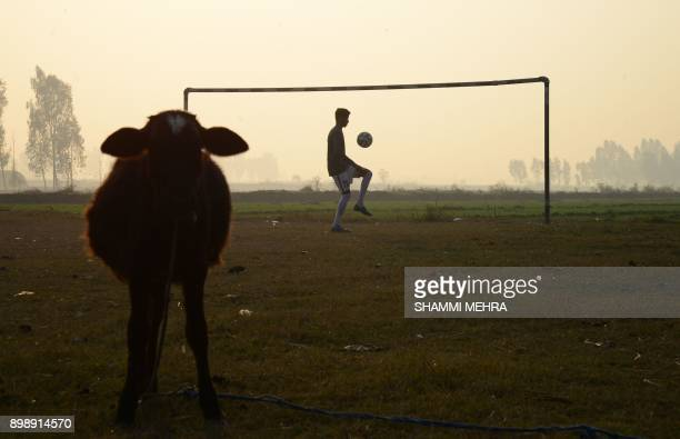 An Indian boy plays football on a pitch next to a cow on the outskirts of Jalandhar on December 16 2017 / AFP PHOTO / Shammi MEHRA