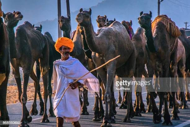 An Indian camels traders gathers to sale their camels at the camel fair grounds in Pushkar Rajasthan India on 31 October 2017 Thousands of livestock...