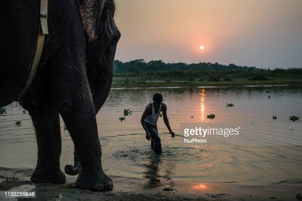 An Indian Elephant baths in the Rapti River at sunset Sauraha Chitwan National Park Nepal on March 24 2019