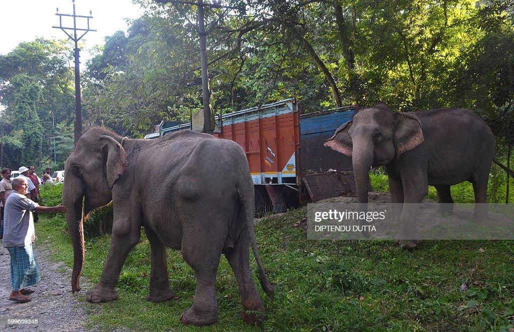 INDIA-WILDLIFE-ELEPHANT : News Photo