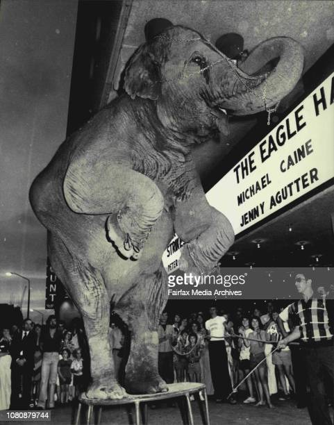 An Indian elephant outside Hoyts Entertainment centre in George street city last night to the delight of the theater crowd performed to publish the...