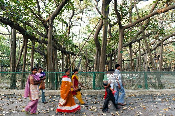 An Indian family walking around The Great Banyan tree Thought to be between 200 and 250 years old The Great Banyan is a tree growing in Howrah...