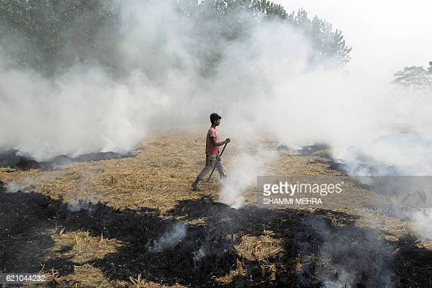 TOPSHOT An Indian farm labourer burns paddy stubble in a field on the outskirts of Jalandhar in Punjab state on November 4 2016 New Delhi and...