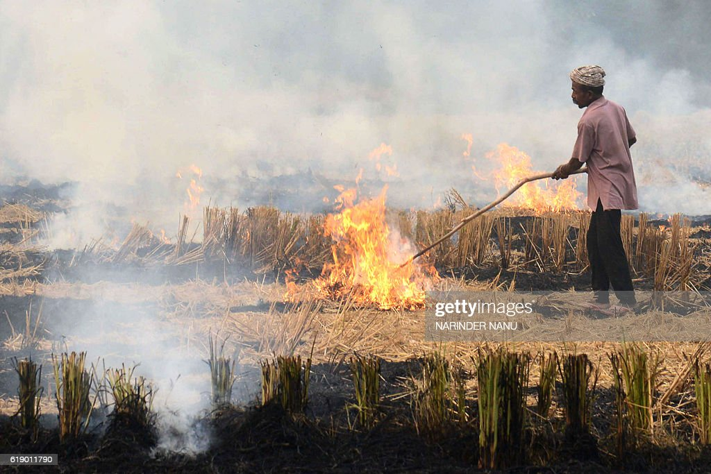 An Indian farmer burns paddy stubble in a field near the Indian Pakistan Wagah Border, about 35 kms from Amritsar on October 29, 2016. Every year around this time, farmers in Haryana and Punjab set paddy stubble ablaze to prepare ground for the next crop. In the process, the fires damage soil quality and cause heavy pollution but the farmers say they have no alternative. / AFP / NARINDER