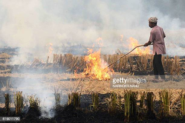 An Indian farmer burns paddy stubble in a field near the Indian Pakistan Wagah Border about 35 kms from Amritsar on October 29 2016 Every year around...