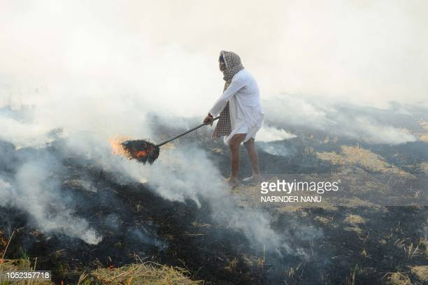 An Indian farmer burns rice straw after harvesting the paddy crops in the fields on the outskirts of Amritsar on October 17 2018 Smog levels spike...